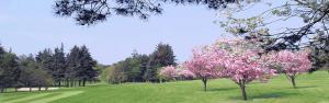 Ballochmyle Golf Club Featured Image.